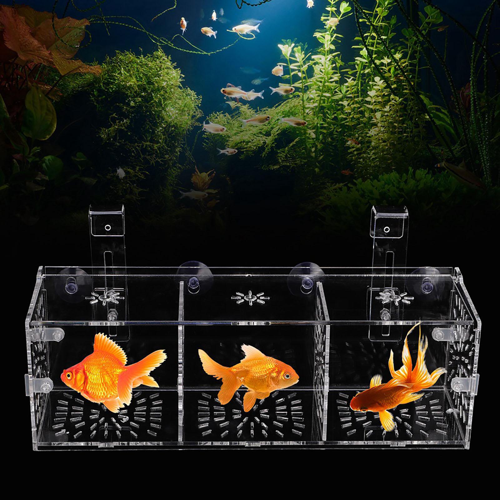 Fry Baby Fish Tank Guppy Breeding