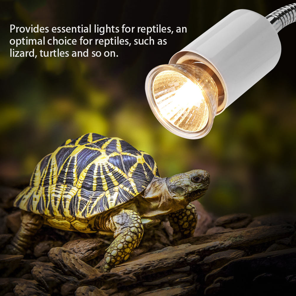 UV lamps for turtles: selection, instruction manual. Does a turtle need an ultraviolet lamp? 12
